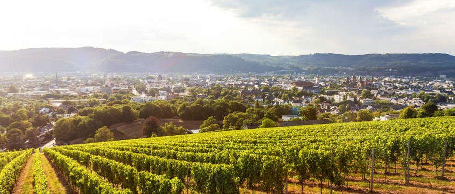 Städtereise Trier - Weine